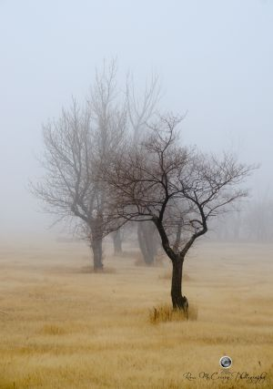 Misty Morning #2